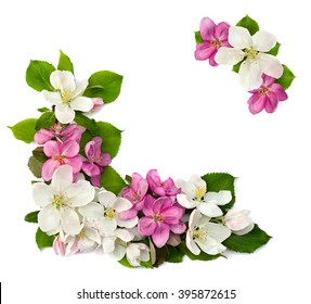 Frame of flowers apple tree on a white background with space for text.