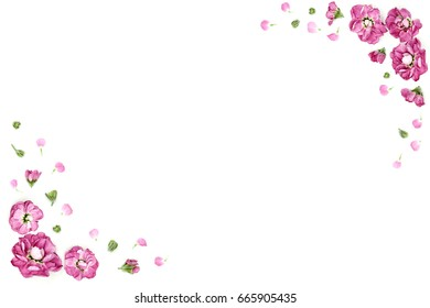 Frame from flowers, patterns from flowers, composition of flowers, botany, floral patterns, pattern of flowers on isolated background