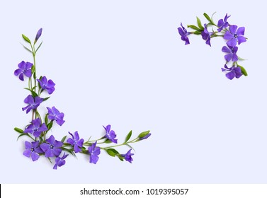 Frame of flowers periwinkle (Vinca minor, common names: lesser periwinkle, dwarf periwinkle, myrtle, creeping myrtle) on a light background with space for text. Top view, flat lay.