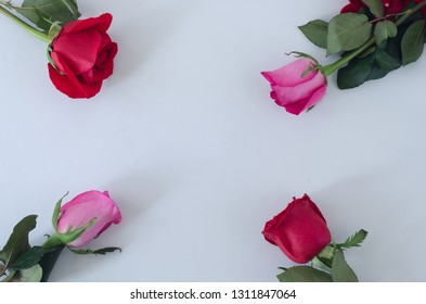 Frame of four roses on white background. Space to copy. Top view.