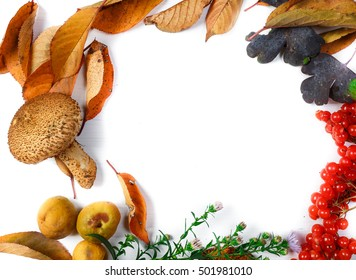 frame of fresh autumn leaves, flowers and berries