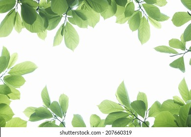 Frame Of Fresh Green Leaves