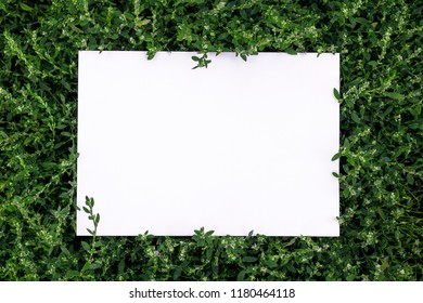 Frame of grass on a white sheet of paper.