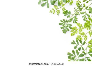 frame of green herbal leaves