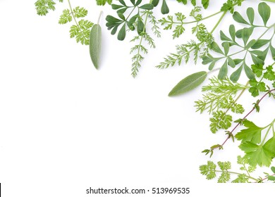 frame of green herbal leaves in white background