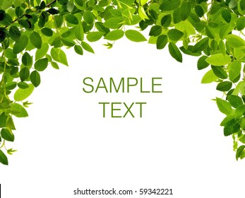 Frame from green leafs isolated on white background with space for text.
