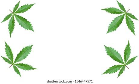 frame of green leaves marijuana on a white background. mockup cannabis leaf.