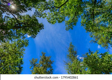 Frame green tree branches against the blue sky. Natural nature trees and blue sky. Copy space. Tree branch.