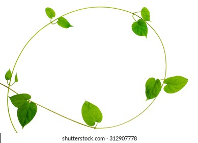 Frame of heart-shaped green leaf vine on white background