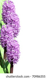 frame of hyacinth on grunge background