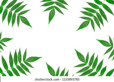 Frame from isolated on white background green leaves. Minimal style. Copyspase