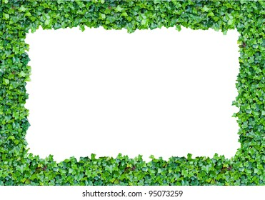 frame with ivy and a blank space in the middle