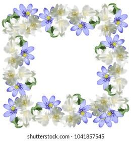 Frame of jasmine and liverworts