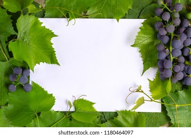 Frame of leaves on a white sheet of paper.