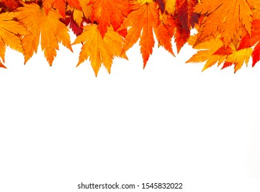 Frame made of autumn maple leaf leaves isolated  on white background,