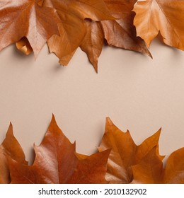 Frame made of brown maple leaves. Autumb background. Creative flat lay composition, top view.