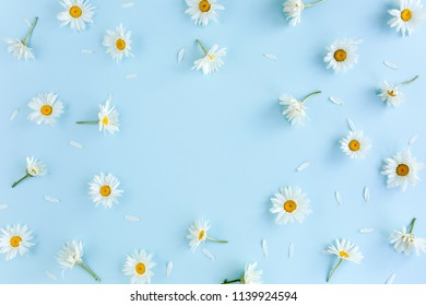 Frame made of chamomiles, petals, leaves on blue background. Flat lay, top view