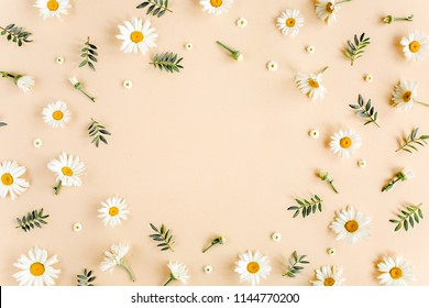 Frame made of chamomiles, petals, leaves on beige background. Flat lay, top view floral background.