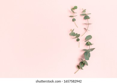 Frame made of eucalyptus branches. Green leaves composition with place for text on a pink pastel background.