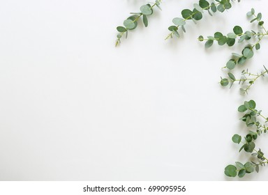 frame made of eucalyptus branches on white background. Flat lay, top view. copy space