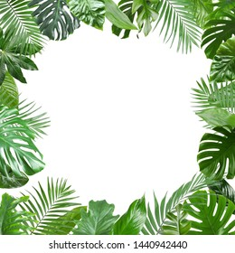 Frame made of fresh green tropical leaves on white background. Space for design