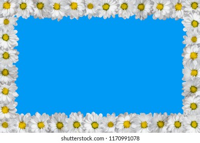 Frame made of white daisies. Isolated on blue.