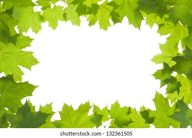 Frame of maple leaves in back light. Isolated on a white.