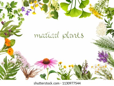 Frame with medical plants, isolated