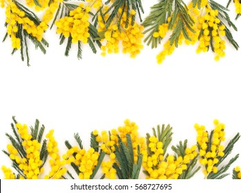 Frame of mimosa flower. Isolated on white.