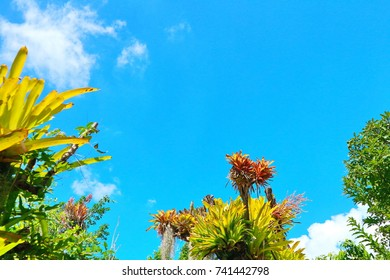 Frame natural background tropical rainforest in the park of thailand sky is beautiful sunshy