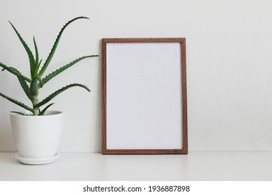 frame on the wall and aloe in white flowerpot
