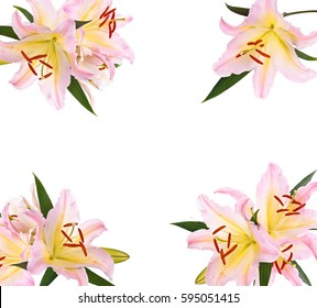 Frame of pink lilies isolated on white background.