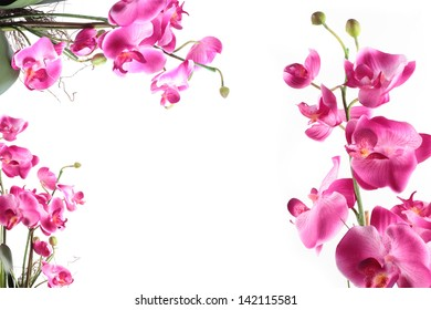 Frame of pink streaked orchid flower, isolated on white background