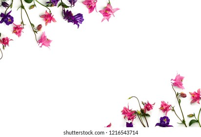 Frame of pink and violet flowers columbine ( Aquilegia vulgaris, granny's bonnet ) on a white background. Top view, flat lay