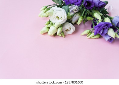 Frame of purple white Lisianthus on pink background.