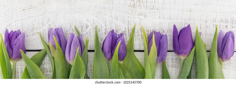 Frame of purple(violet) tulips on white rustic wooden background with copy space for message. Spring flowers. Greeting card for Valentine's Day, Woman's Day and Mother's Day. Top view.