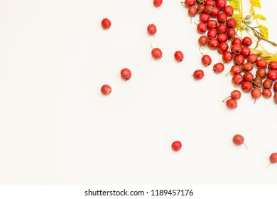 Frame of red hawthorn berries (Crataegus rhipidophylla) in autumn on a white toned background with space for text. flat lay.