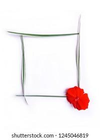 frame of ryegrass grass and geranium flower