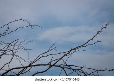 frame of thorns branch tree on cloudy sky for background