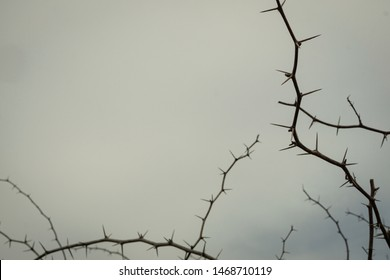 frame of thorns branch tree on white clouds background
