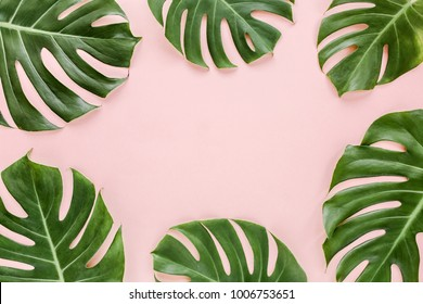 Frame of tropical leaves Monstera on pink background a space for text. Top view, flat lay