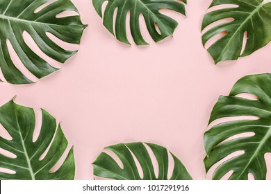 Palm Leaves On Pink Background High Res Stock Images Shutterstock Adry tropical cuties ¿quien aprueba tu registro? https www shutterstock com image photo frame tropical leaves monstera on pink 1017291916