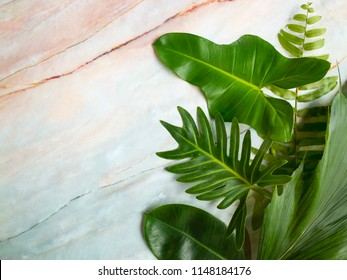 frame of tropical leaves. Summer concept.leaf on marble table