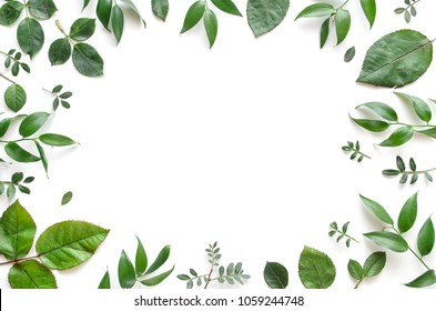 Frame from various leaves on a white background with space for text. Green floral background. Top view. Copy space. Mock-up