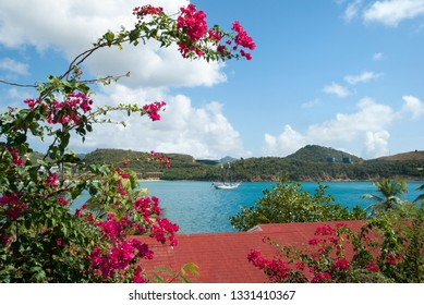The framed view through flowers of Lindbergh Bay on St. Thomas island (U.S. Virgin Islands).