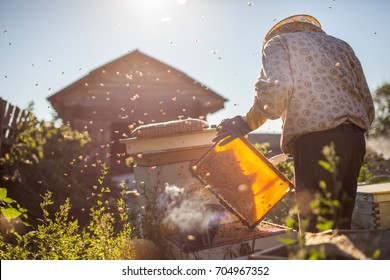 Frames of a bee hive. Beekeeper harvesting honey. Beekeeper Inspecting Bee Hive
