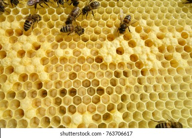 Frames of a bee hive. Beekeeper Inspecting Bee Hive.