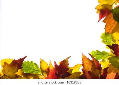 Framework from autumn multi-coloured  leaves