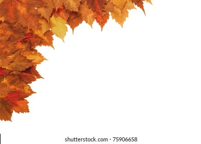 Framework from autumn yellow leaves on a white background