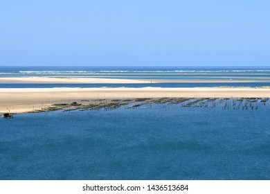 France, Aquitaine, Oysters beds of the Arguin sandbank in the Arcachon basin, on the Atlantic coast.